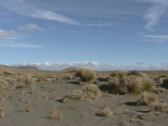 Rangipo desert pan tussock grass & bushes Stock Footage