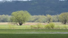 Polder meadow in spring, Unteres Odertal National Park, Germany Stock Footage