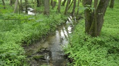Brook in an alluvial forest, Unteres Odertal National Park, Germany Stock Footage