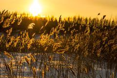 Winter sunset Stock Photos