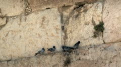 Pigeons on The Western Wall - Jerusalem 2 Stock Footage