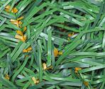 Plastic branches closeup Stock Photos