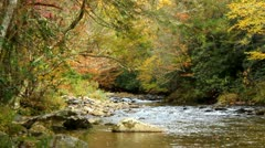 Autumn leaves fall into rocky river 3 Stock Footage