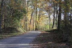 Autumn Road.JPG - stock photo