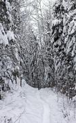 snowy forest path - stock photo