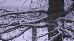 Snow falling fast cu of snow covered tree high shutter speed Stock Footage