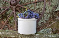 concord grapes in crock - stock photo
