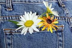 Daises in blue jean pocket Stock Photos