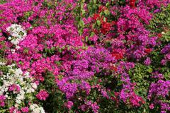Tropical flower wall Stock Photos