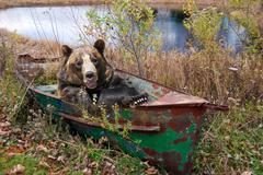 smiling bear in row boat - stock photo