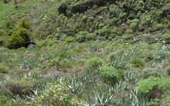 la gomera - stock photo