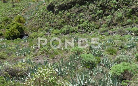 Stock photo of la gomera