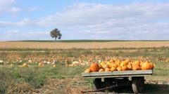 Pumpkin Patch time lapse HD Stock Footage