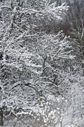 snowy forest detail - stock photo