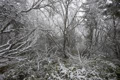 Magical winter forest Stock Photos