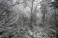 Stock Photo of magical winter forest