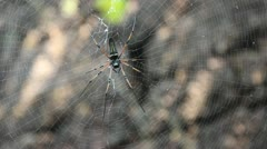 Spider on the web Stock Footage