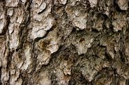 Stock Photo of bark