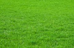 Stock Photo of green grass texture