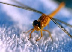 Dragonfly on cloth Stock Photos