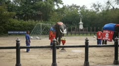 Thailand elephant show tourist attraction Stock Footage