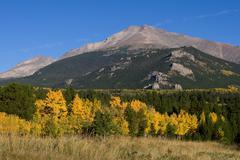 Aspen Trees and Longs Peak in Autumn - stock photo