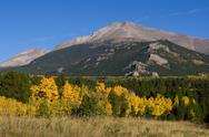 Aspen Trees and Longs Peak in Autumn Stock Photos