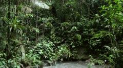 Tilt down to a salt lick in the rainforest, Ecuador Stock Footage
