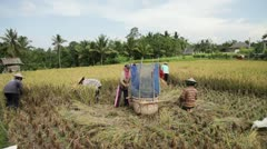 Rice cultivation and farming in Bali by women peasants 3/6 Stock Footage