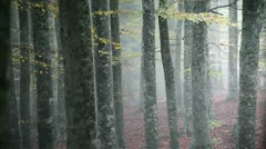 Mist in beech forest Stock Footage