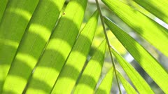 palm fronds - stock footage