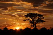 Stock Photo of African sunset with silhouetted tree