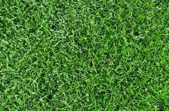 beautiful green grass - horizontal field shot from above - stock photo