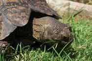 Turtle eating grass Stock Photos