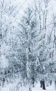 winter landscape forest - stock photo