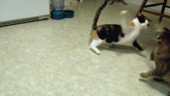 Cat fight 2 Stock Footage