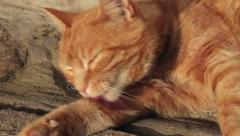 Ginger cat licks fur and rolls over Stock Footage