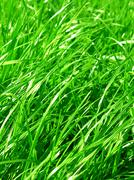 Fresh grass background Stock Photos