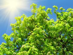 Green tree and sunlight on a blue sky background Stock Photos