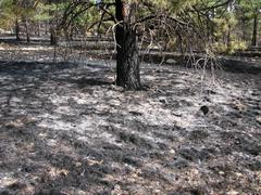 Stock Photo of controlled burn aftermath