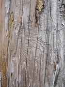 Wood borer tunnels Stock Photos