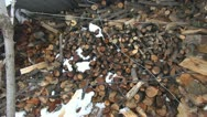 Panoramic view of a stock of wood chips Stock Footage
