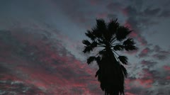 Palm Tree Silhouette Blows Windy Sunset Dark Ruby Red Clouds Outdoors Evening Stock Footage