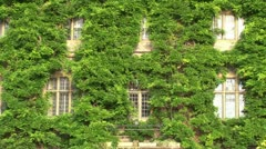 Leaf Covered Mansion Building Stock Footage