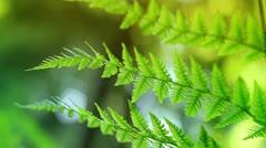 Ferns In Sunlight Stock Footage
