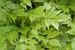 Stock Photo of fresh green leaves