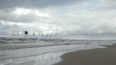 Gulls fly above a sea coast. Stock Footage