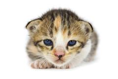cute asia kitty cat - stock photo