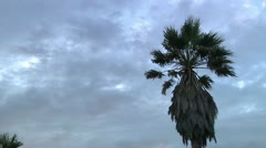 Palm Tree TL Arkistovideo