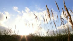 Grass ears and sky with clouds at sunset. Stock Footage